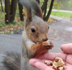 Happy Squirrel, Fox Squirrel, Squirrels, Animals And Pets, Cute Animals, Squirrel Pictures, Racoon, Chipmunks, Make Me Smile