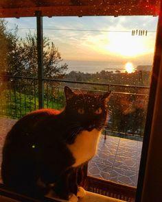 Sådär efter 2 dagar regn kom solen och katten tillbaka  Önskar er alla en riktig bra arbetsdag   #husigrekland#Grekland #Peloponnesos#remotework