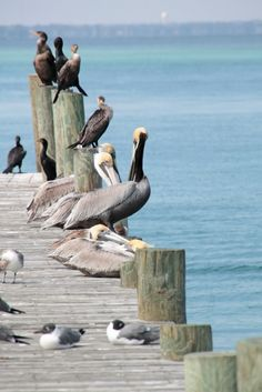 This looks like where the birds would hang out at the ferry dock in Mayport, FL- always loved to see them!