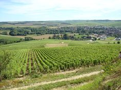 vineyards of Chablis ~ FRANCE