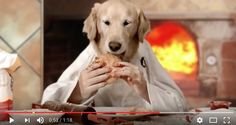 HILARIOUS VIDEO- DOG ACTUALLY MAKES A PIZZA FROM SCRATCH  Dogs, cute dog pics, cute dog videos, funny dogs, funny dog videos, funny dog pics, dog tips, cute dog, dog quotes