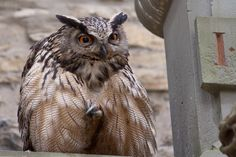 Uhu ● eagle owl by Andreas Geisen on 500px