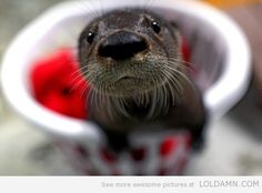 Baby otter wants loves