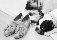 & Other Stories | Dogs.