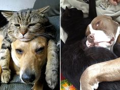 These Dogs Found The Cuddliest, Comfiest Seat In The House. On The Cat.