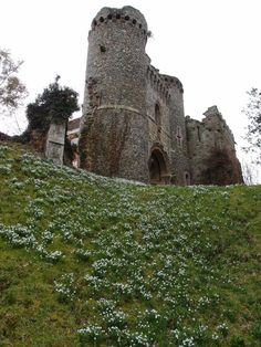 Snowdrops at Benington Lordship Folly, Herts, UK