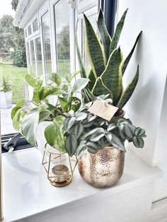 Gorgeous plants! Don't forget to bring the outside in!! Lush greens mixed with golds and whites make such a statement in any room 🌱.. Commercial Interior Design, Commercial Interiors, Bannister, Touch Of Gold, Lush Green, Interior Accessories, Neutral Colors, Don't Forget, Pots