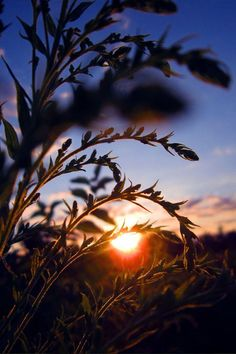Nature photography  sun  sunset  warm  sky  by MooziXMerchandising, | http://fireworkscake.mai.lemoncoin.org