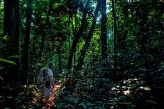 Never seeing anyone else, Gary and Melinda McElveen deep in the jungle trekking the endangered Forest Elephant in the Dzanga-Sangha Special Reserve (Central African Republic) www.dzanga-sangha...