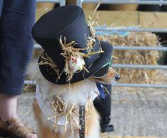 "Daisy-Mae ""Slash"" scarecrow Daisy Mae, Dog Show, Riding Helmets, Dogs, Doggies, Pet Dogs, Dog"