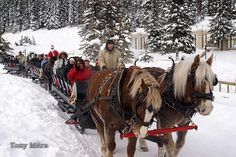 sleigh ride :) - do this with Bogus Creek in  Boise Idaho!! It is the best dinner sleigh ride in the country! It's an Idaho tradition.