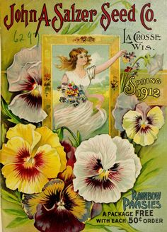 1912 catalogue - Rainbow Pansies