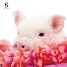 Artlist Collection THE PIG calendar