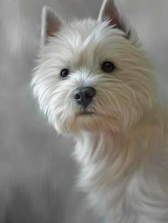 68 Beste Westies images on Pinterest in 2018    2018 Doggies, Dogs and Westies bbca2e
