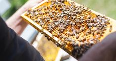 Help for the Honey Bees  Even if youre not in the beekeeping business commercially or as a hobbyist you may have heard that honey bees are in trouble. There are a few main reasons that we could list in this dilemma and most experts will most likely agree that the Varroa Mite is near or at the top of that list. Bee Hive Thermal Industries designed this Thermal System utilizing an industrial grade heater blanket and electronic controls which are easily installed and removed from the hive. The…