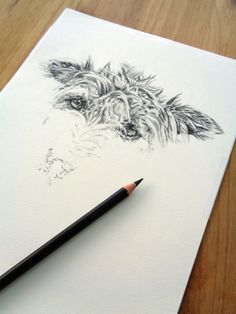 Custom pet portrait of Pickles the dog progressing in charcoal pencil. By Emma Gorton