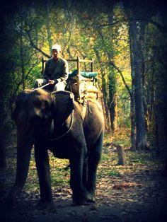 Ride an elephant.  Chitwan Elephant Riding