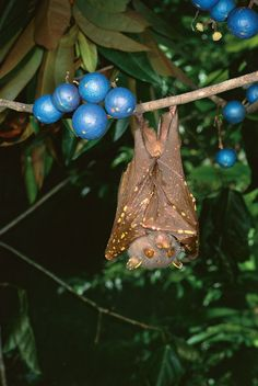 Resilience is vital for vulnerable rainforest fauna - Wet Tropics ...
