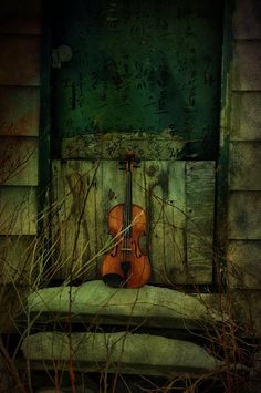 Raindrops and Roses : Photo