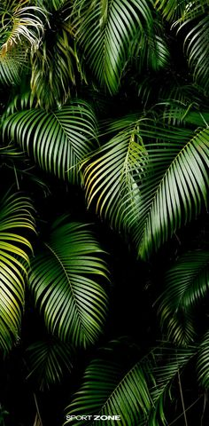 Buy Jungle background by elwynn on PhotoDune. Jungle background of tropic rain forest tree and leaf. Phone Backgrounds, Wallpaper Backgrounds, Iphone Wallpaper, Pineapple Backgrounds, Trendy Wallpaper, Plant Wallpaper, Screen Wallpaper, Leaves Wallpaper, Tropical Wallpaper