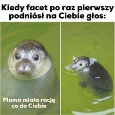 Wtf Funny, Funny Cute, Geek Meme, Funny Lyrics, Polish Memes, Weekend Humor, Best Memes Ever, Funny Mems, Komodo Dragon