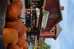 Davison Orchards Country Village in Vernon is well-known and loved for their farm food and family fun. Vernon Bc, Orchards, Wineries, Things To Do, Tourism, Canada, Country, Outdoor Decor, Fun