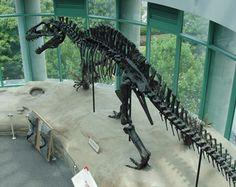 The wonderful Acrocanthosaurus display at the North Carolina Museum of Natural…
