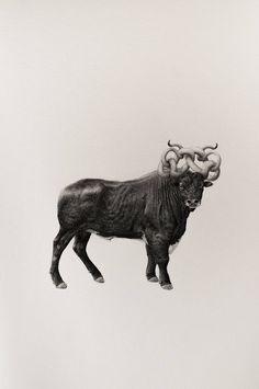 Bestiary of Improbable Animals Drawings – Fubiz Media