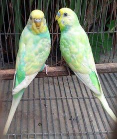 I have one that looks similar to the bird on the right, she has a major attitude problem...lol