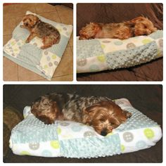 DIY Snuggle Sack — Kirby the Dorkie