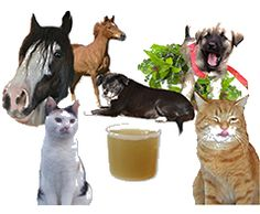 entgiftung hund, entschlackung hund, stoffwechsel hund, stoffwechselaktivierung hund, toxine hund, toxinbelastung hund, toxine hunde, leber hund, leberkrankheiten hund, leberschädigung hund, leber geschädigt hund, verdauungsstörung hund, verdauung hund, verdauungsstörung hunde, verdauung hunde - Tierheilkundezentrum Online Shop