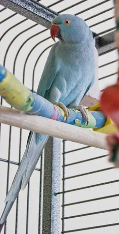 How to Set Up a Bird Cage