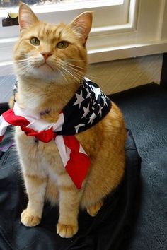 Bob conquers USA