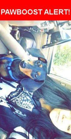 Please spread the word! Coco was last seen in Joplin, MO 64801.  Message from Owner: We miss coco so much please be on the look out we were traveling from California back home to  Indiana   Nearest Address: at cracker barrel