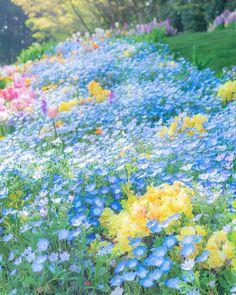 57 ideas for nature flowers spring gardens Purple Flowers, Spring Flowers, Beautiful Flowers, Spring Blooms, Illustration Blume, Flower Aesthetic, Flower Pictures, Nature Pictures Flowers, Belle Photo