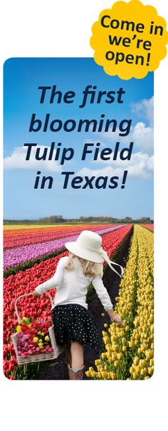 U-Pick Tulips & Tulip Bulbs The first tulip field in Texas! OUR U-PICK TULIP FIELD IS NOW OPEN FOR 2017!Open 7 Days a Week, 9am – 8pm$3 Per Person (Ages 1 and Under Free) Call Us: (940)-230-6512 10656 FM2931 Pilot Point, TX 76258 Questions? Gift Certificates Purchase a gift certificate that you can use at …