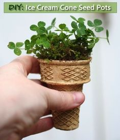 DIY Ice Cream Cone Seed Starters - a simple biodegradable solution for starting your seeds...#gardening #hometeading
