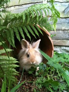 This is a lovely photograph of Nibbles - enjoying the shade! Make sure that your rabbit's run has shaded sections too.