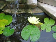 Keep Your Garden Pond Water Clear With Quilt Batting via Empress of Dirt~ This is a great idea!