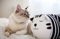 Lovely Animals: I ❥ the Kitteh