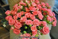 Beställ blommor för avhämtning eller leverans. Världens Blommor Norra Långgatan 16 (mittemot Polishuset) 26131 Landskrona 0418 65 11 59 www.varldensblommor.se
