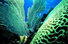 Image result for coral reef plants