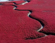 20places where nature went crazy with colour