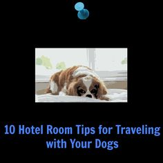 10 tips for a stress free hotel stay with your dogs.  #Traveling and #Dogs – Hotel Rooms  http://twolittlecavaliers.com/2013/01/traveling-and-dogs-hotel-rooms.html
