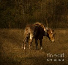 Title  Foal In Meadow   Artist  Anne Rodkin   Medium  Photograph - Photography