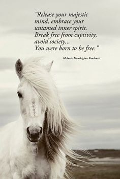 """""""Release your majestic mind, embrace your untamed inner spirit.   Break free from captivity, avoid society...  You were born to be free.""""    Melanie Moushigian Koulouris"""