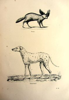 1860 antique dog and fox print vintage curious by LyraNebulaPrints, $24.95