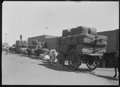 008456PD: Wool teams at Carnarvon, 1911 http://encore.slwa.wa.gov.au/iii/encore/record/C__Rb2940930?lang=eng