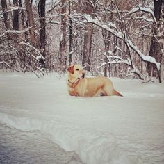 @Molly Godfrey of McGaheysville says Cash is 115lbs so you know it's a big snow when it's up to his neck!