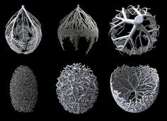 Nervous System: hyphae system | Flickr - Photo Sharing!